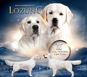 lozungc